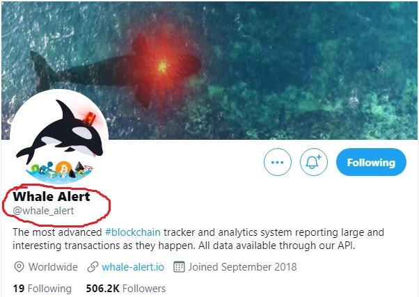 whale alert twitter